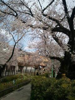2012-04-07 東京美人加藤組.jpg